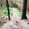 Nant Gwrtheyrn Downhill