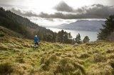 Grass, Sky & Bike.jpg