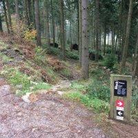Haldon Forest Mountain Bike Trails