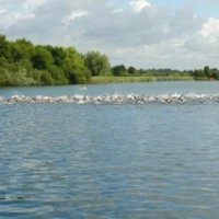 South Cerney Lakes Route