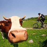 Champoussin mountain biking