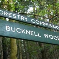 Bucknell Downhill Track