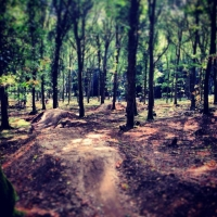 Forest of Dean Mountain Biking Trails