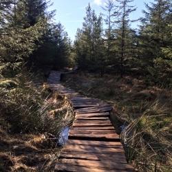 Gisburn Forest Bike Trails