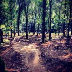 Forest of Dean Mountain Biking Trails